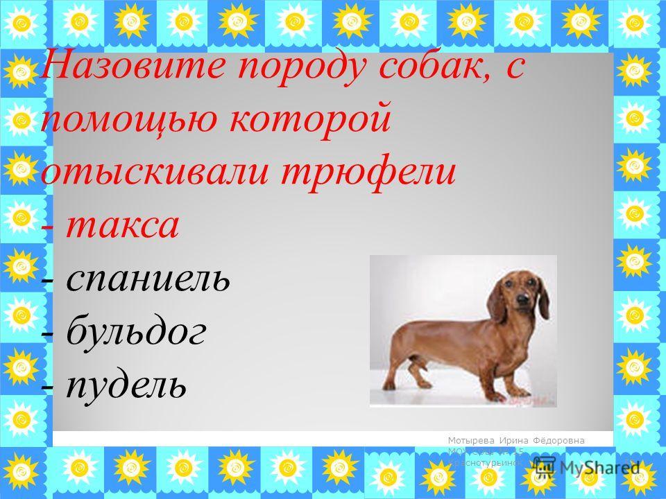 Назовите породу собак, с помощью которой отыскивали трюфели - такса - спаниель - бульдог - пудель 57 Мотырева Ирина Фёдоровна МОУ СОШ 15 Краснотурьинск