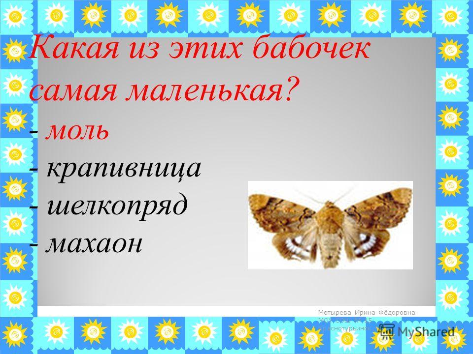 Какая из этих бабочек самая маленькая? - моль - крапивница - шелкопряд - махаон 7 Мотырева Ирина Фёдоровна МОУ СОШ 15 Краснотурьинск