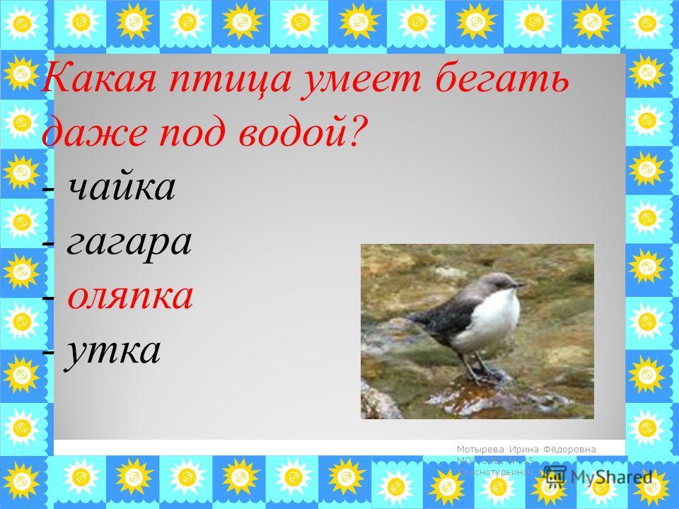 Какая птица умеет бегать даже под водой? - чайка - гагара - оляпка - утка 9 Мотырева Ирина Фёдоровна МОУ СОШ 15 Краснотурьинск