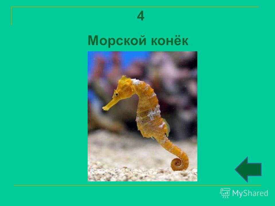 4 Морской конёк