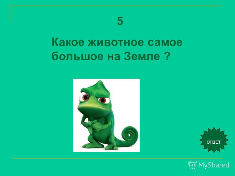 ответ 5 Какое животное самое большое на Земле ?