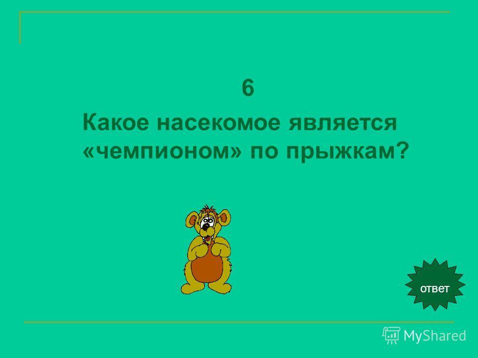 ответ 6 Какое насекомое является «чемпионом» по прыжкам?