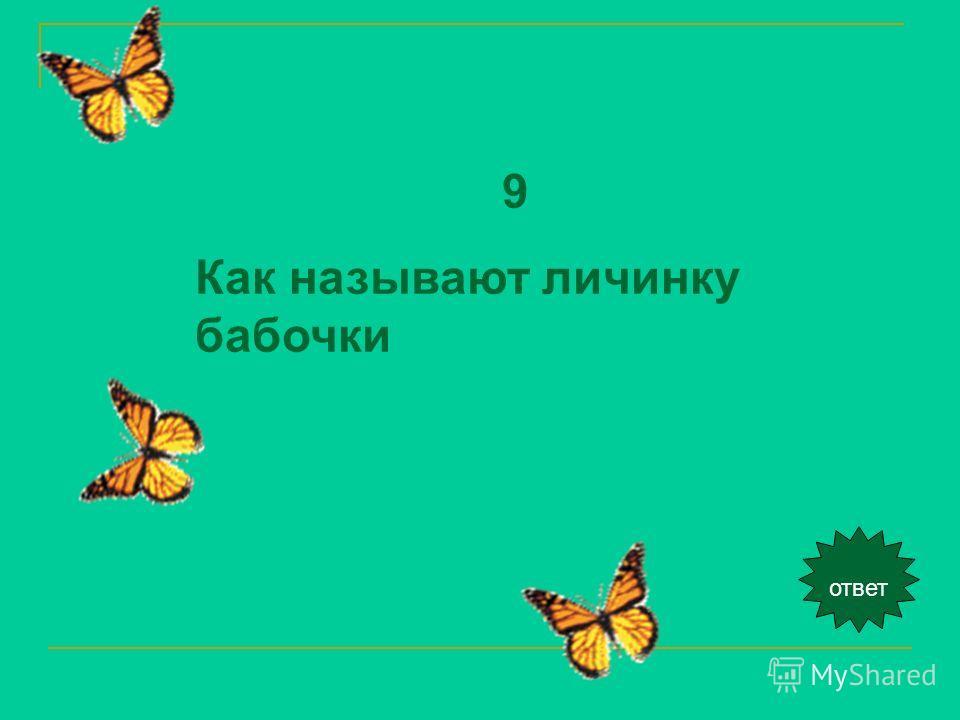 ответ 9 Как называют личинку бабочки