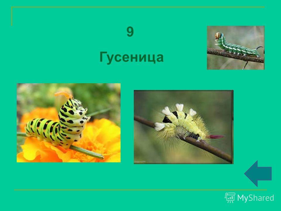 9 Гусеница