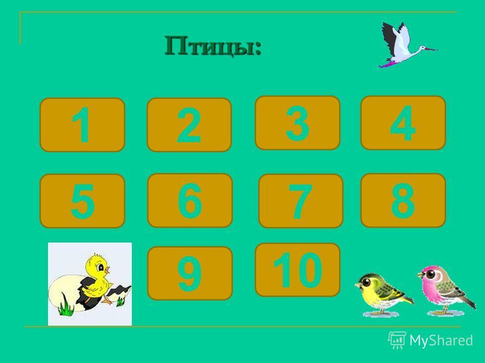 Птицы: Птицы: 12 6 5 34 9 8 7 10