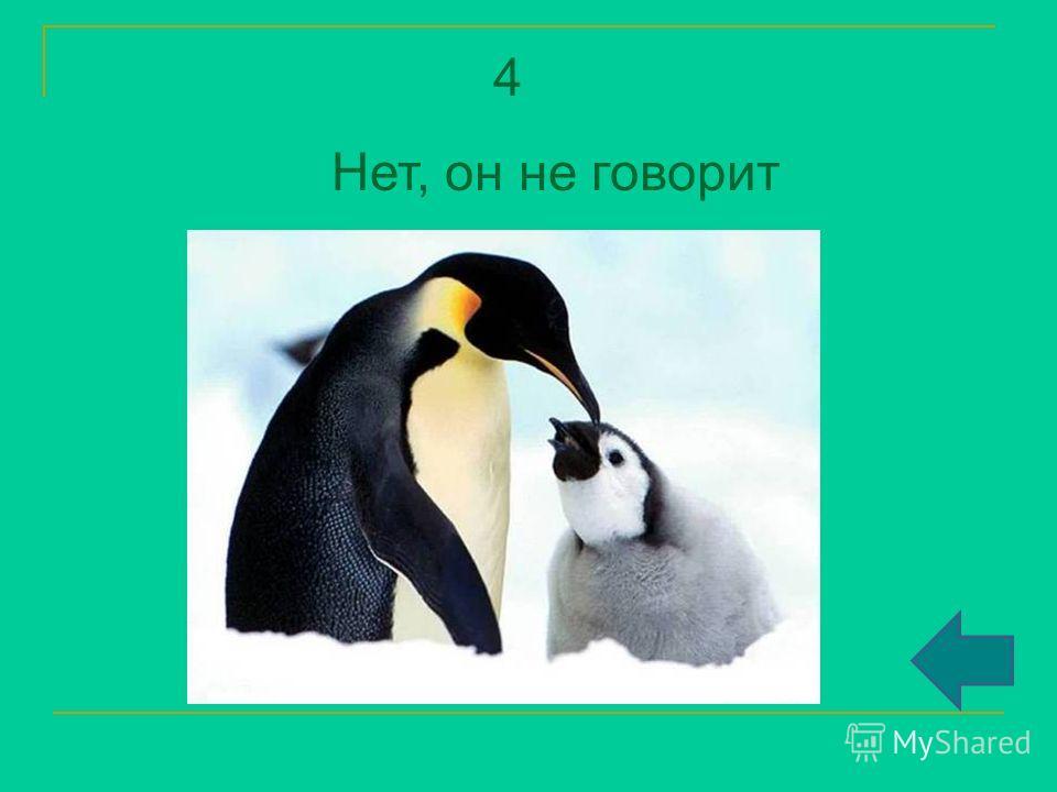 4 Нет, он не говорит