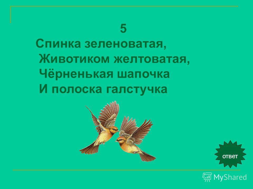ответ 5 Спинка зеленоватая, Животиком желтоватая, Чёрненькая шапочка И полоска галстучка