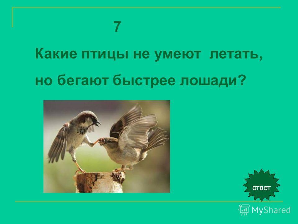 ответ 7 Какие птицы не умеют летать, но бегают быстрее лошади?