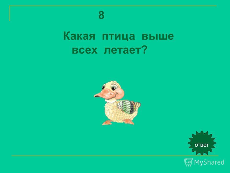 ответ 8 Какая птица выше всех летает?