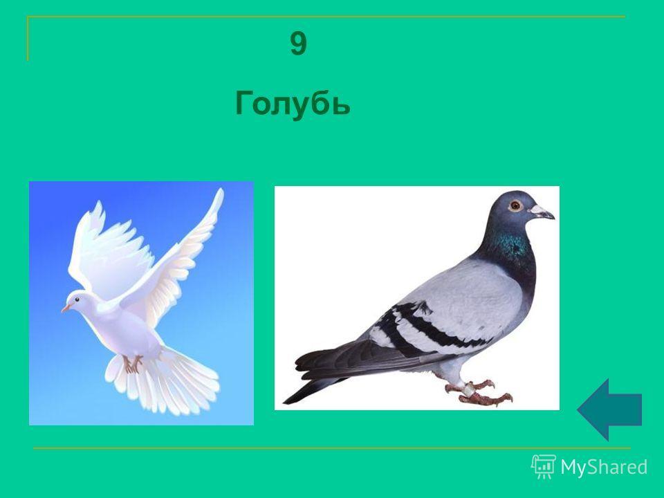 9 Голубь