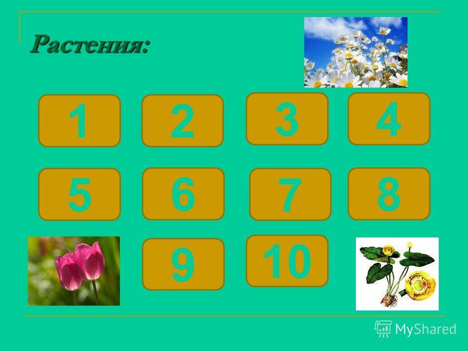 Растения: 12 6 5 34 9 8 7 10