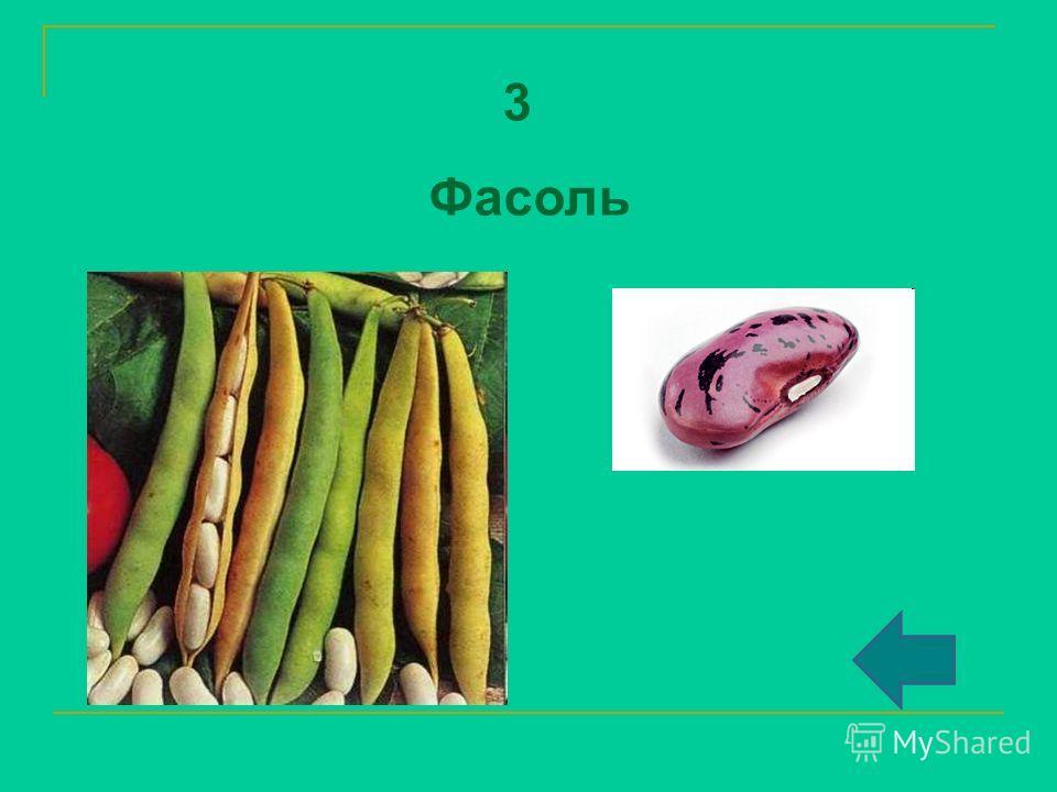 3 Фасоль
