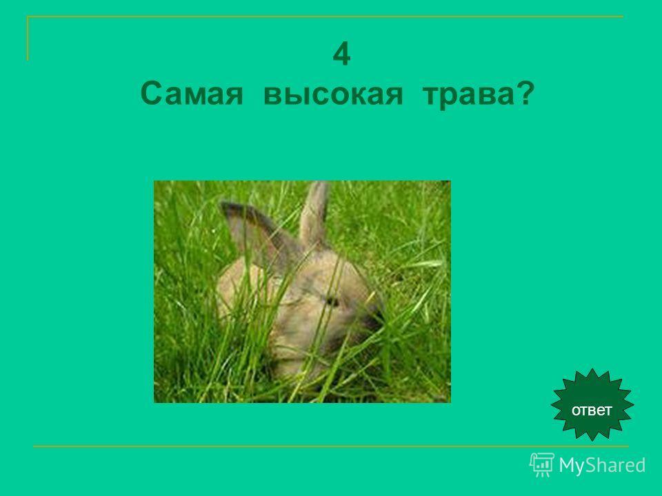 ответ 4 Самая высокая трава?