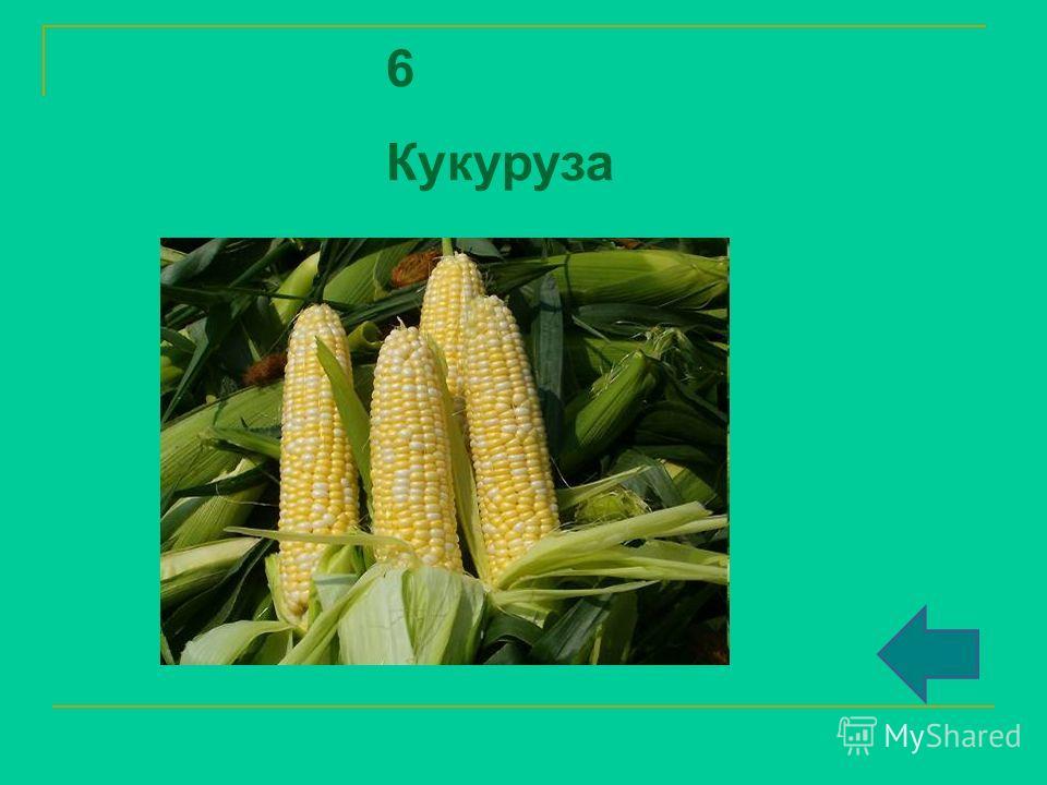 6 Кукуруза