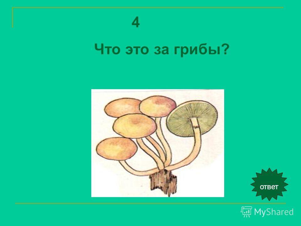 4 Что это за грибы? ответ