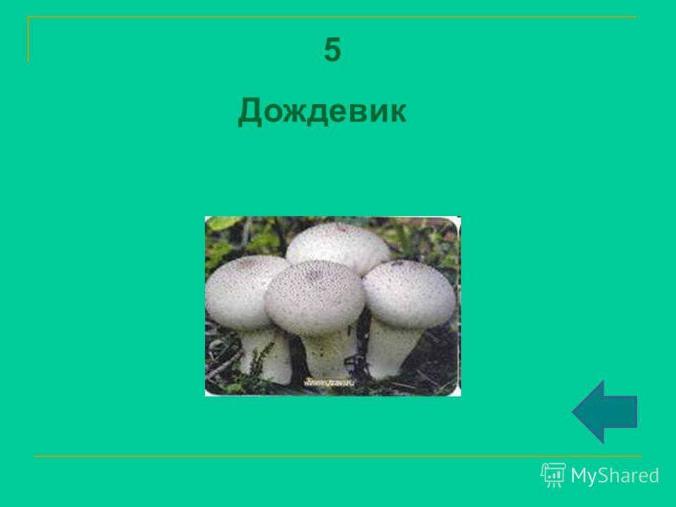5 Дождевик