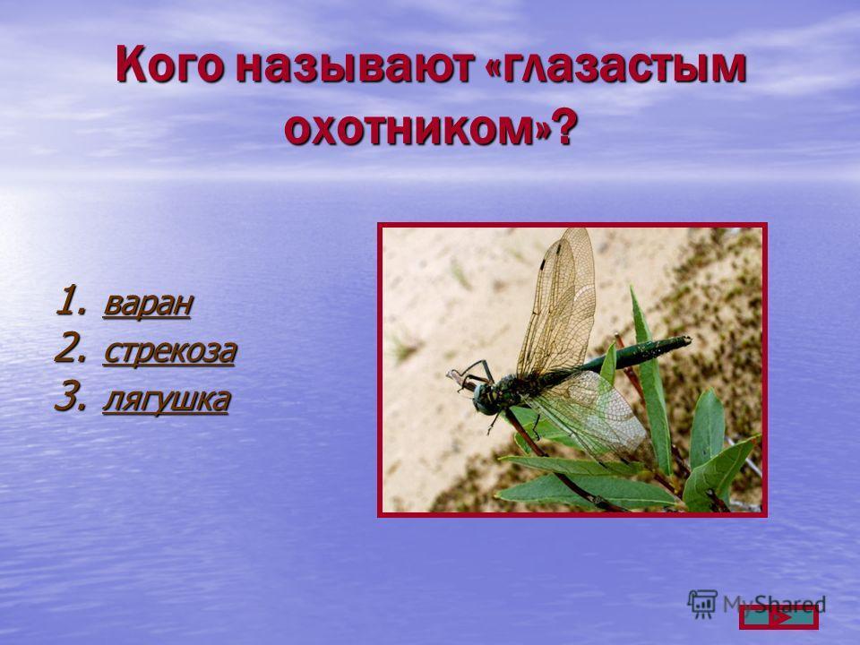Кого называют «глазастым охотником»? 1. варан варан 2. стрекоза стрекоза 3. лягушка лягушка