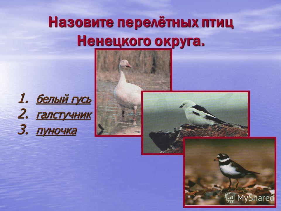 Назовите перелётных птиц Ненецкого округа. 1. белый гусь белый гусь белый гусь 2. галстучник галстучник 3. пуночка пуночка