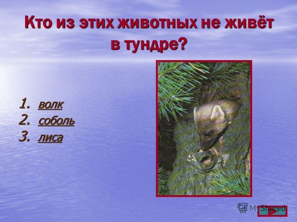 Кто из этих животных не живёт в тундре? 1. волк волк 2. соболь соболь 3. лиса лиса