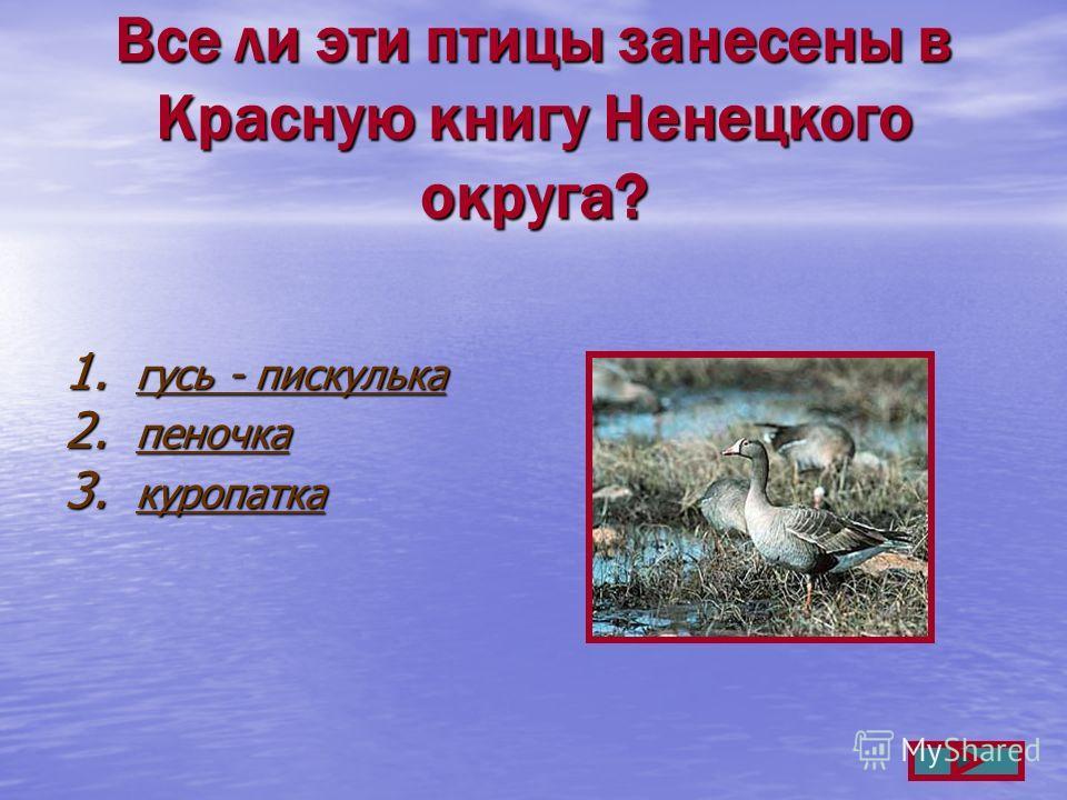 Все ли эти птицы занесены в Красную книгу Ненецкого округа? 1. гусь - пискулька гусь - пискулька гусь - пискулька 2. пеночка пеночка 3. куропатка куропатка