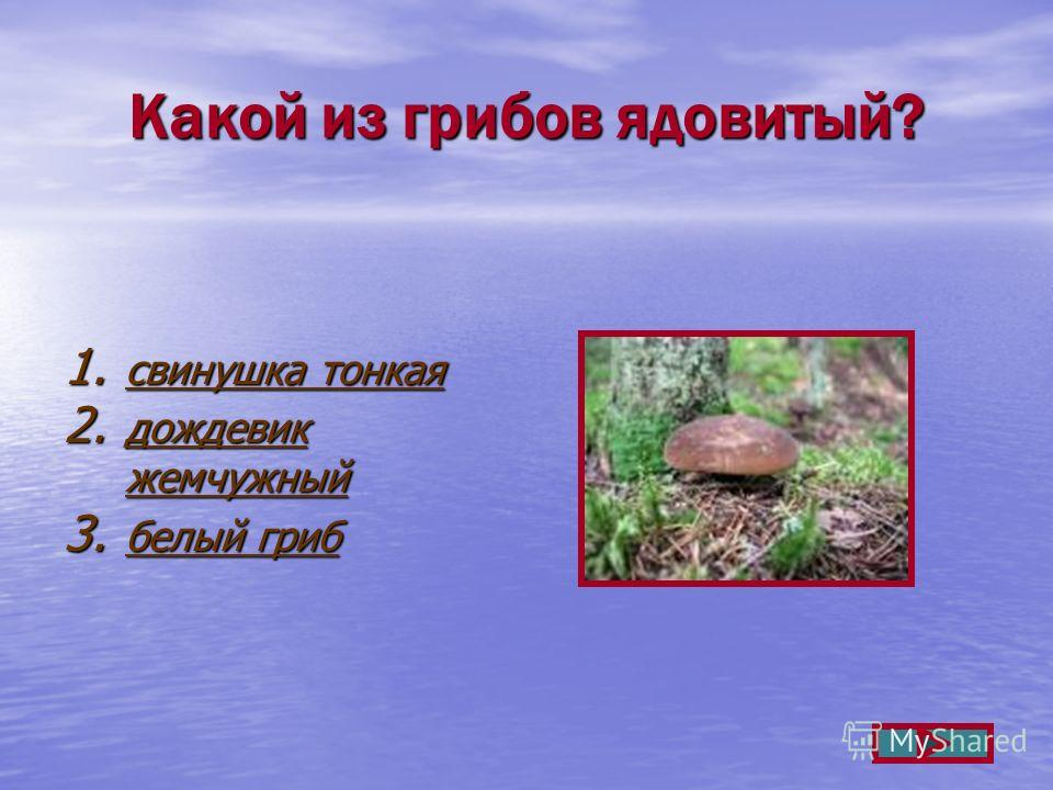 Какой из грибов ядовитый? 1. свинушка тонкая свинушка тонкая свинушка тонкая 2. дождевик жемчужный дождевик жемчужный дождевик жемчужный 3. белый гриб белый гриб белый гриб