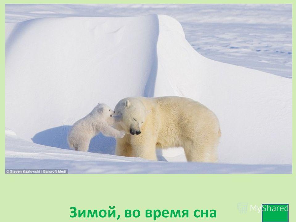 Зимой, во время сна
