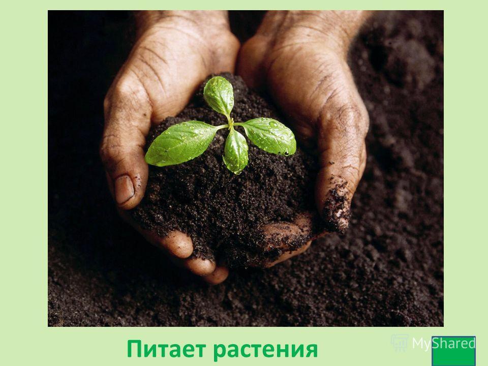 Питает растения