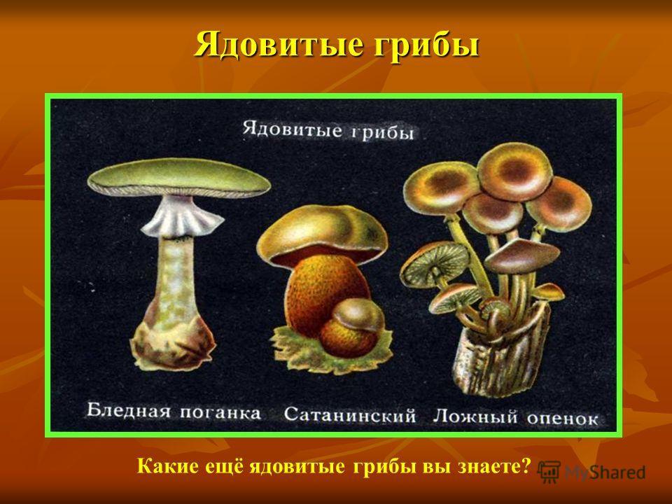 Ядовитые грибы Какие ещё ядовитые грибы вы знаете?