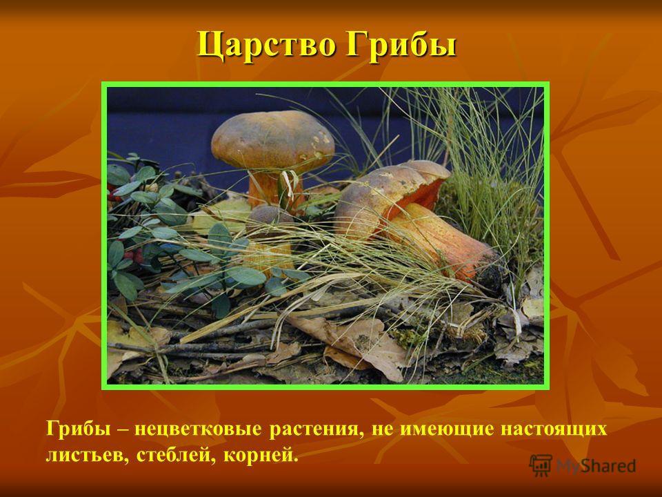 Царство Грибы Грибы – нецветковые растения, не имеющие настоящих листьев, стеблей, корней.