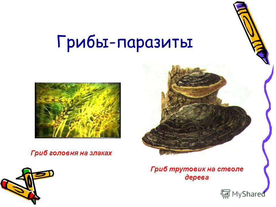 Грибы-паразиты Гриб трутовик на стволе дерева Гриб головня на злаках