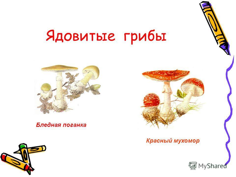 Ядовитые грибы Бледная поганка Красный мухомор
