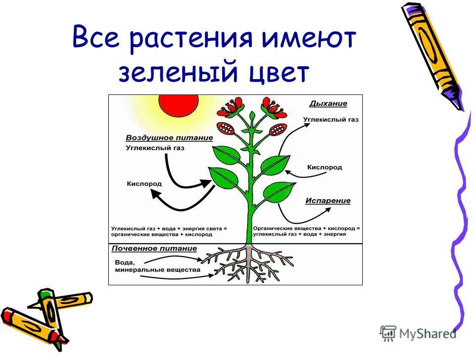 Все растения имеют зеленый цвет