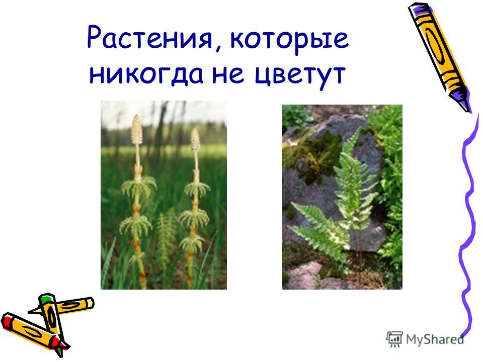 Растения, которые никогда не цветут