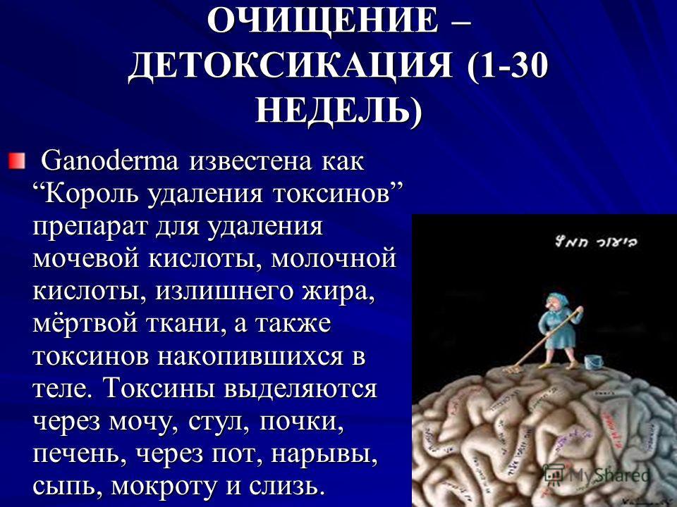 ОЧИЩЕНИЕ – ДЕТОКСИКАЦИЯ (1-30 НЕДЕЛЬ) Ganoderma известна как Король удаления токсинов препарат для удаления мочевой кислоты, молочной кислоты, излишнего жира, мёртвой ткани, а также токсинов накопившихся в теле. Токсины выделяются через мочу, стул, п