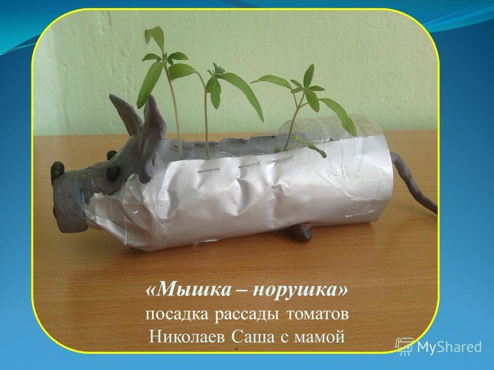 «Мышка – норушка» посадка рассады томатов Николаев Саша с мамой