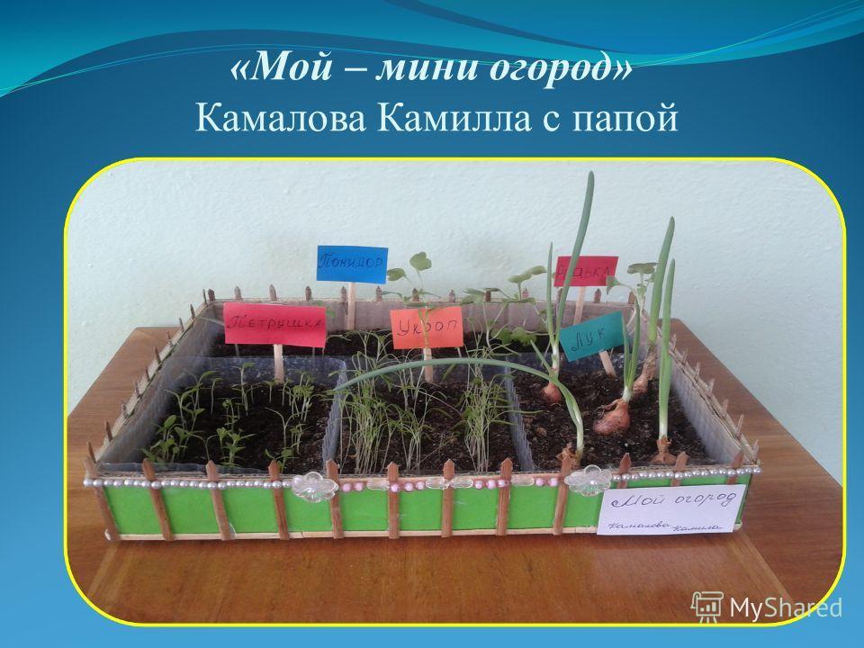 «Мой – мини огород» Камалова Камилла с папой