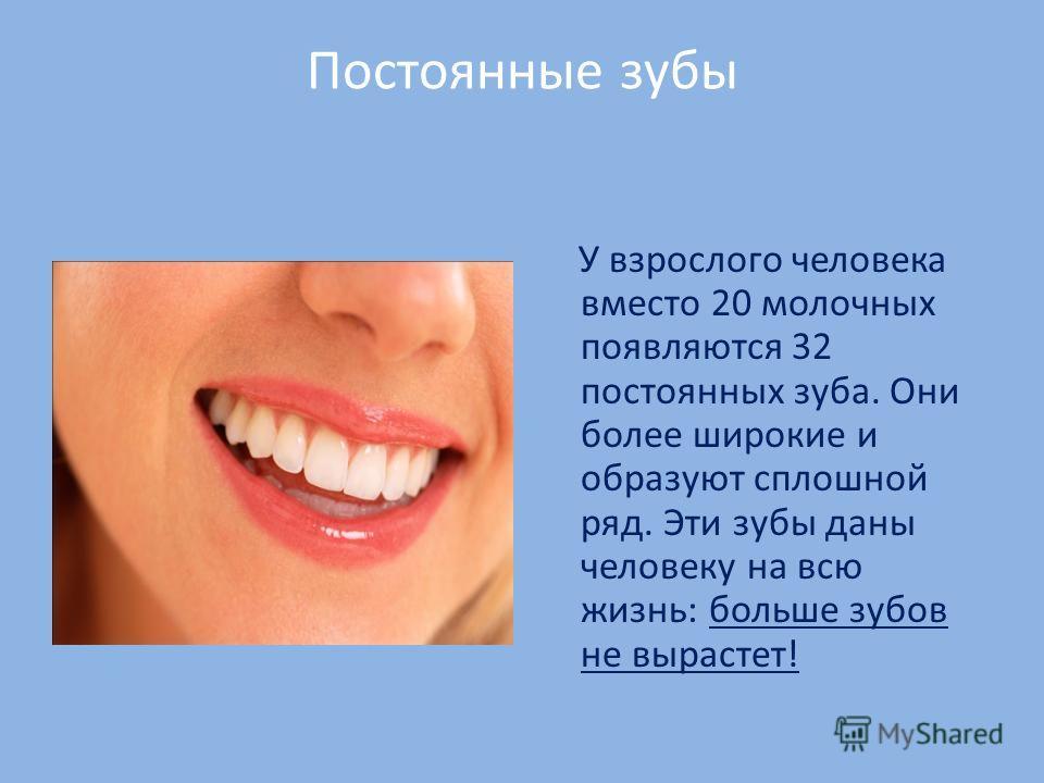 Постоянные зубы У взрослого человека вместо 20 молочных появляются 32 постоянных зуба. Они более широкие и образуют сплошной ряд. Эти зубы даны человеку на всю жизнь: больше зубов не вырастет!
