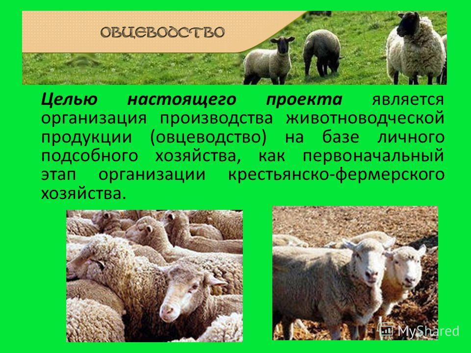 Целью настоящего проекта является организация производства животноводческой продукции (овцеводство) на базе личного подсобного хозяйства, как первоначальный этап организации крестьянско-фермерского хозяйства.