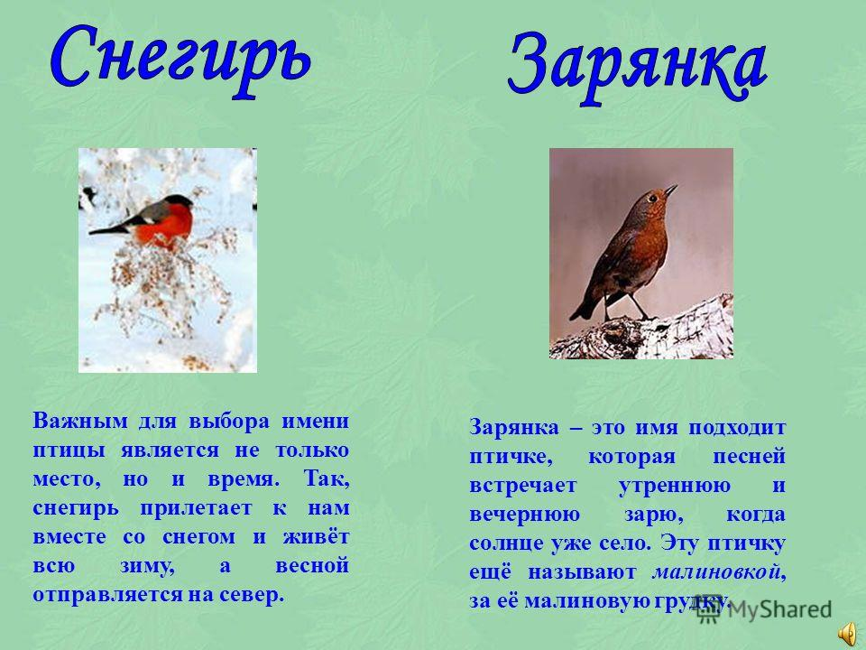 Некоторые птицы получили своё название по месту обитания. Камышовка всю жизнь проводит в камышах, поэтому и прилетает она к нам тогда, когда вода у берегов зарастает камышами.