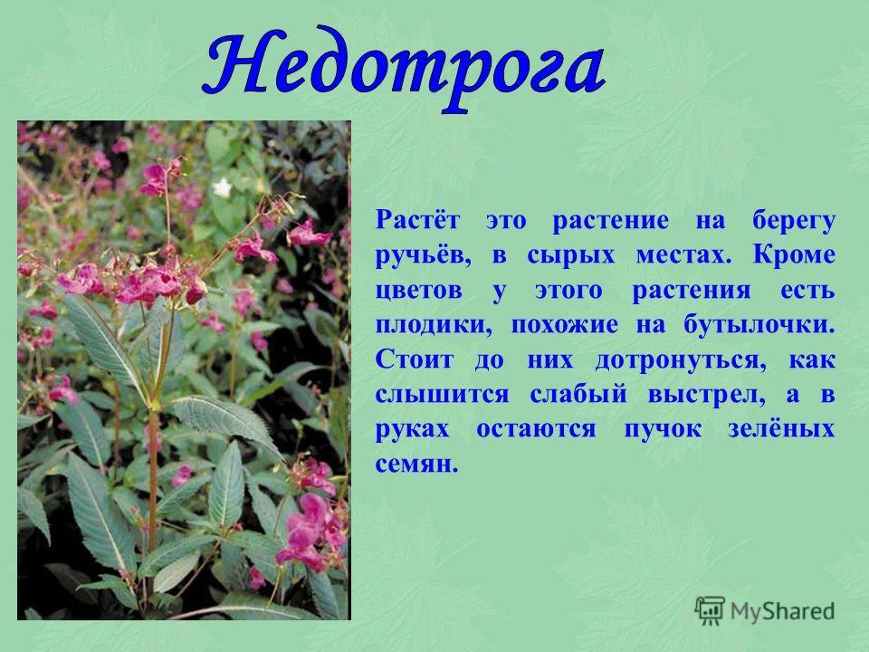 Растёт этот цветок и в поле и в лесу, обвивая своими стеблями всё, что попадается на его пути. Вьюнок назван так за своё поведение.