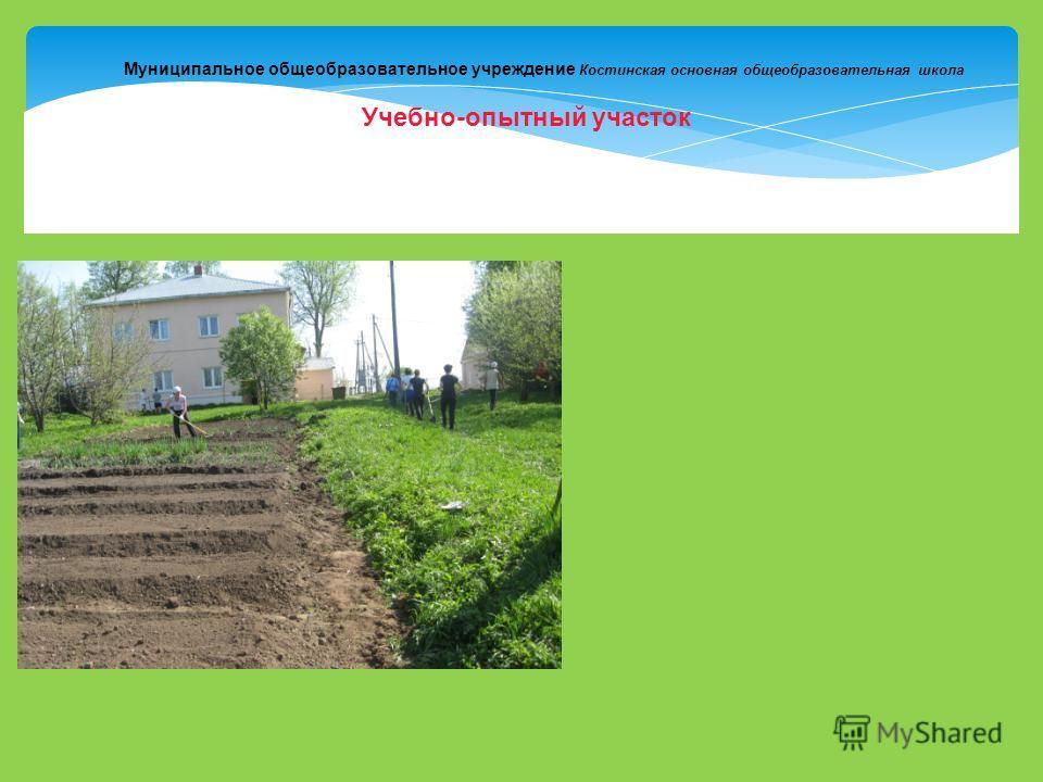 Муниципальное общеобразовательное учреждение Костинская основная общеобразовательная школа Учебно-опытный участок