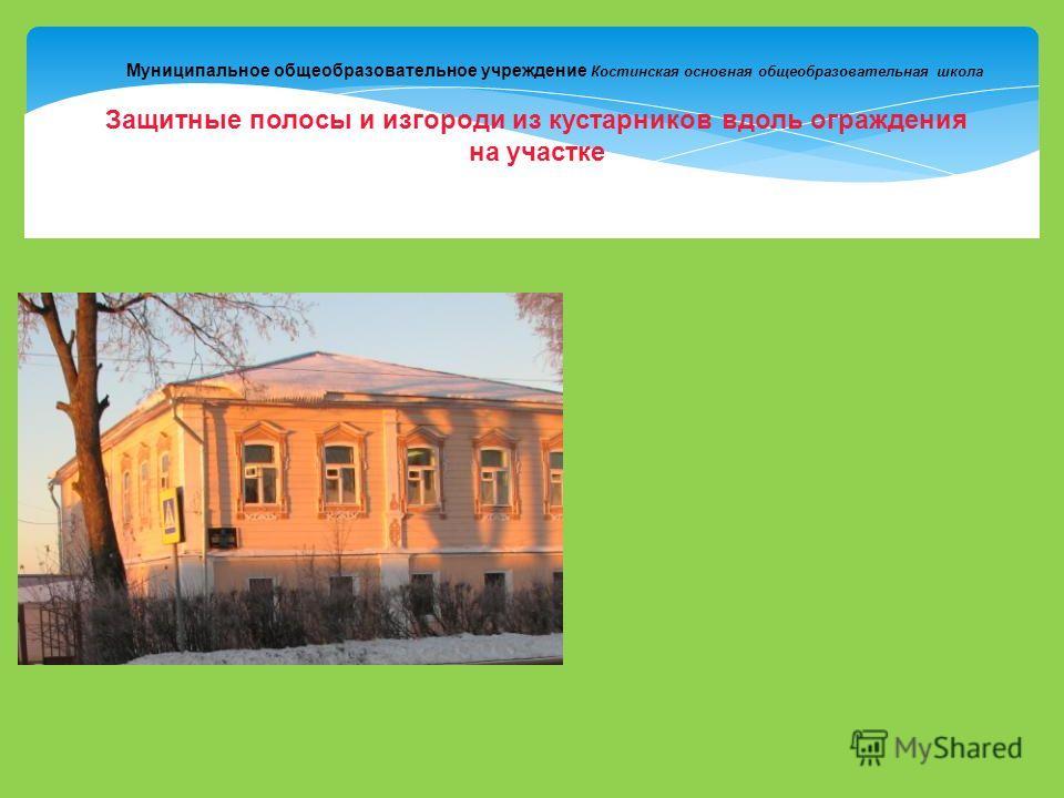Муниципальное общеобразовательное учреждение Костинская основная общеобразовательная школа Защитные полосы и изгороди из кустарников вдоль ограждения на участке