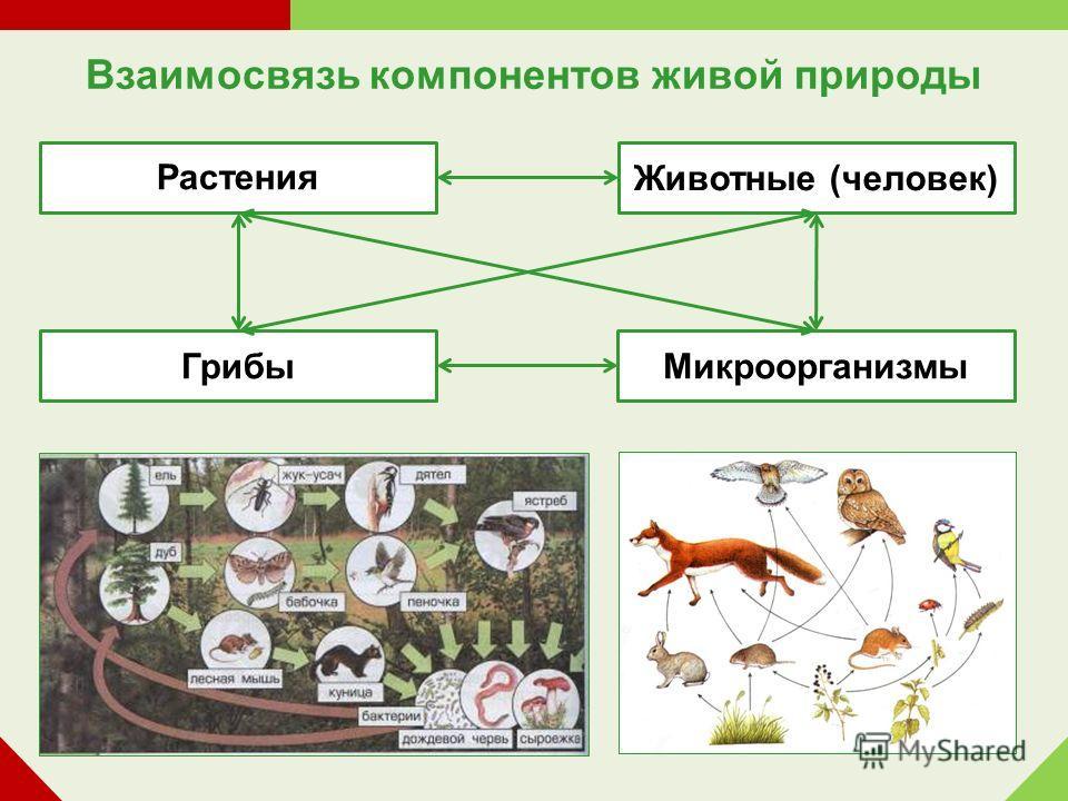 Взаимосвязь компонентов живой природы Растения Животные (человек) Микроорганизмы Грибы