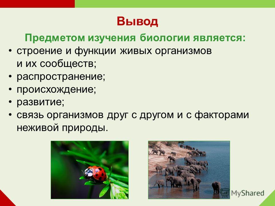 Предметом изучения биологии является: строение и функции живых организмов и их сообществ; распространение; происхождение; развитие; связь организмов друг с другом и с факторами неживой природы. Вывод