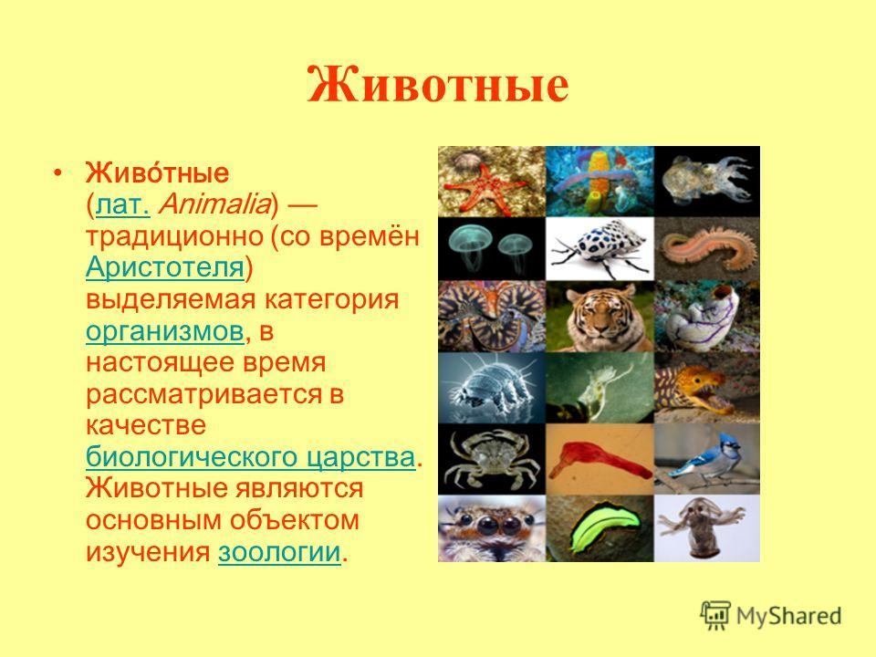 Животные Живо́тные (лат. Animalia) традиционно (со времён Аристотеля) выделяемая категория организмов, в настоящее время рассматривается в качестве биологического царства. Животные являются основным объектом изучения зоологии.лат. Аристотеля организм