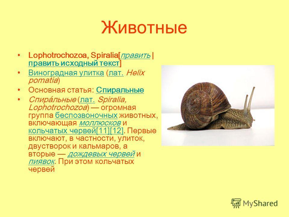 Животные Lophotrochozoa, Spiralia[править | править исходный текст]править править исходный текст Виноградная улитка (лат. Helix pomatia)Виноградная улиткалат. Основная статья: Спиральные Спиральные Спира́льные (лат. Spiralia, Lophotrochozoa) огромна