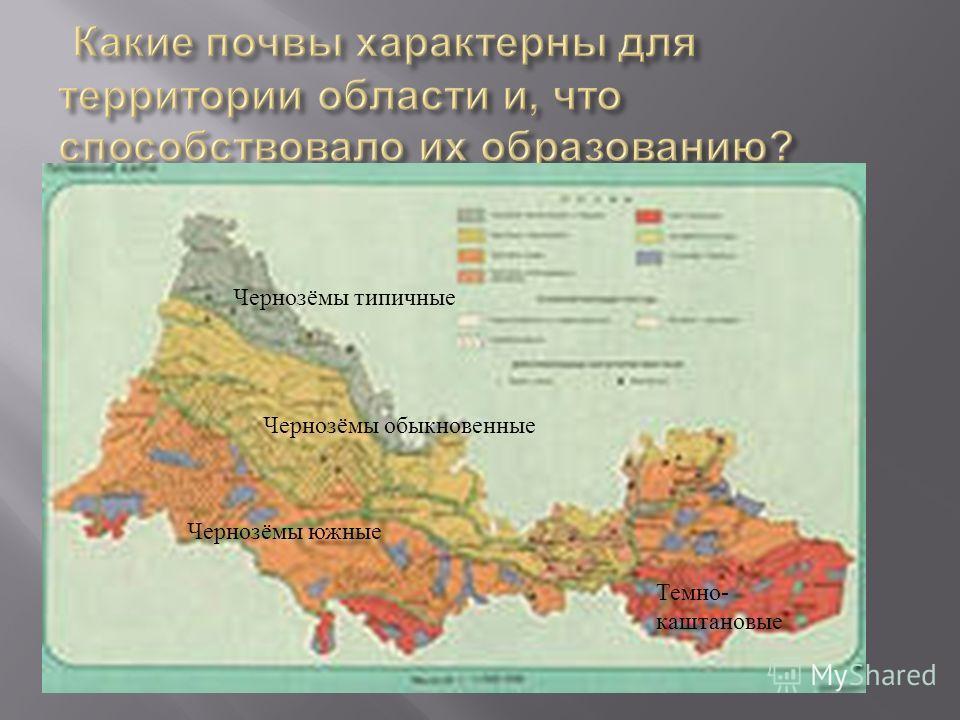 Чернозёмы типичные Чернозёмы обыкновенные Чернозёмы южные Темно - каштановые