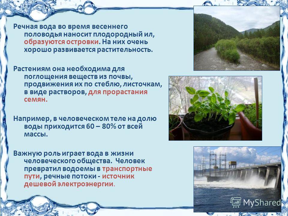 Речная вода во время весеннего половодья наносит плодородный ил, образуются островки. На них очень хорошо развивается растительность. Растениям она необходима для поглощения веществ из почвы, продвижения их по стеблю, листочкам, в виде растворов, для