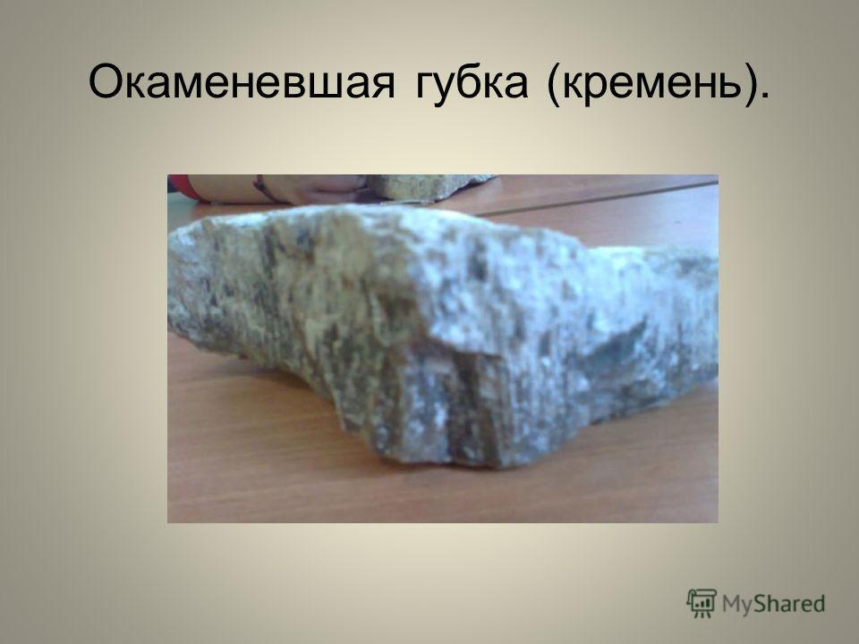Окаменевшая губка (кремень).