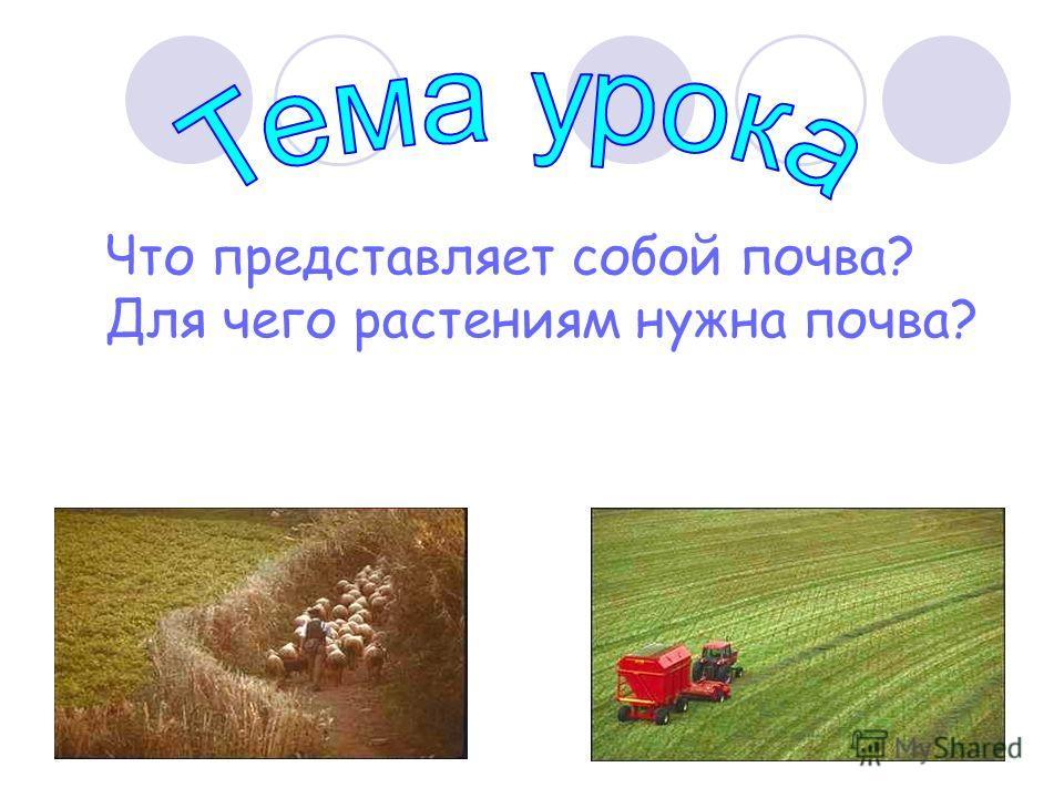 Что представляет собой почва? Для чего растениям нужна почва?